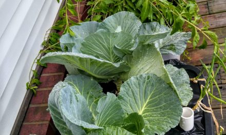 Flood, Hail, Drought or Freeze…Gardening in GAB is a Breeze!